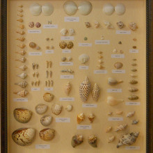Shell Collection for Johanna